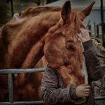 echt contact, paard